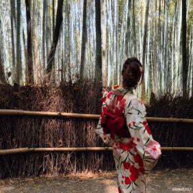 Bambu ormanı, Arashiyama